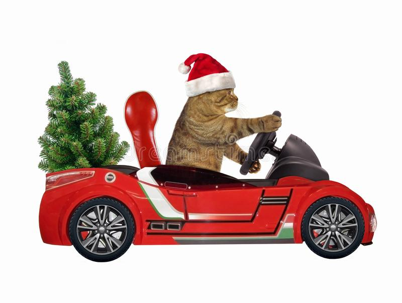 在一辆红色汽车2的猫 图库摄影