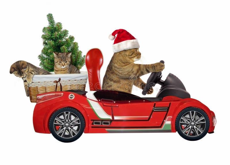 在一辆红色汽车4的猫 免版税库存照片