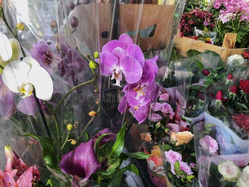 在一透明包裹的兰花在一好日子外面 免版税库存图片