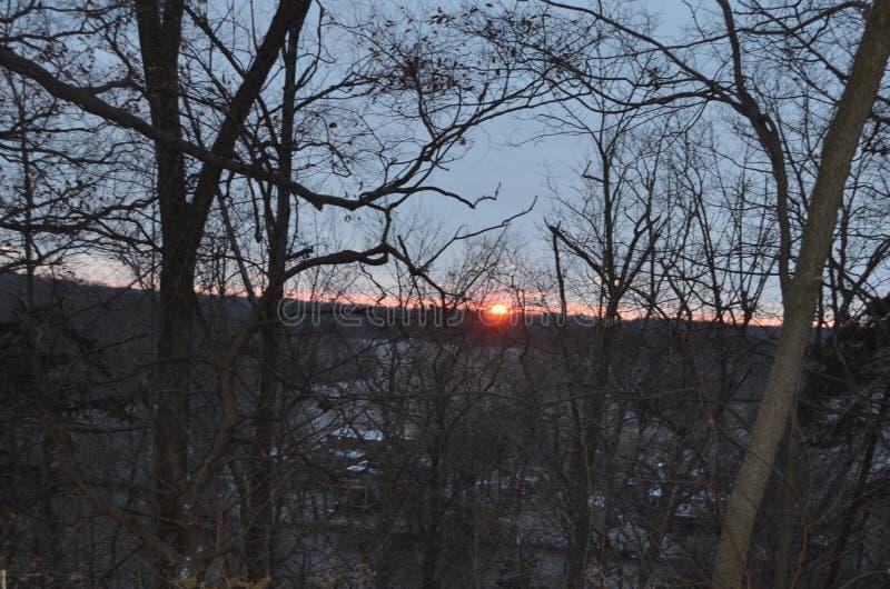 在一高土坎天空蔚蓝的日落在背景中 在前面的树作为silouette 库存图片