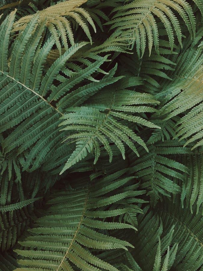 在一黑暗森林围拢的一棵绿色蕨 免版税库存照片