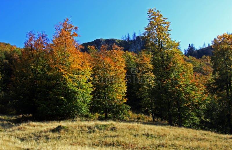 在一晴朗的秋天天期间,五颜六色的森林 库存图片