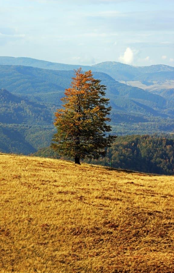 在一晴朗的秋天天期间,在小山的被隔绝的树 库存图片
