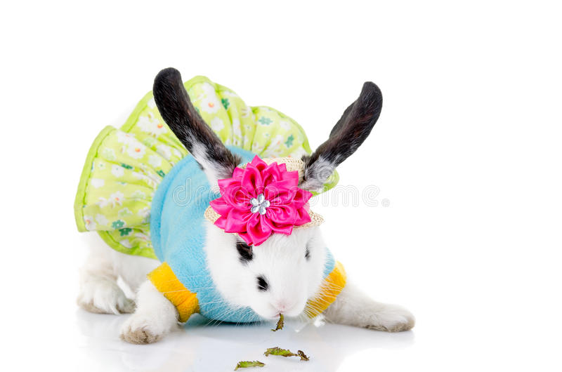 在一件礼服的小兔子有花的 图库摄影