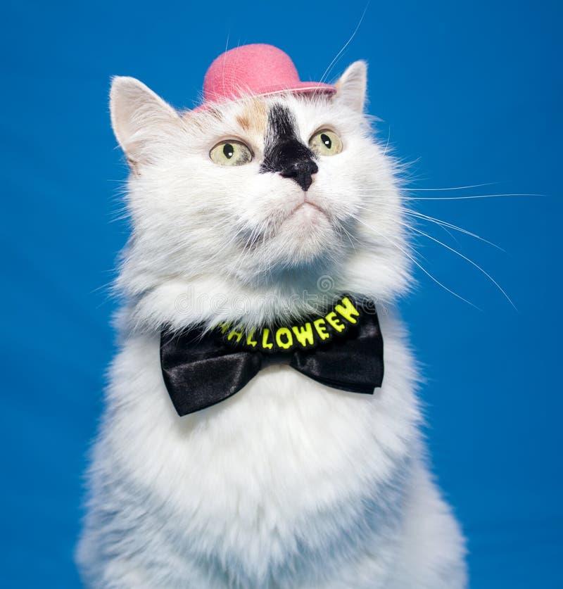 在万圣夜弓领带和帽子的猫 免版税库存照片