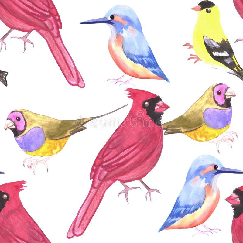 在三人组合色彩设计红色,yello,蓝色的水彩鸟 皇族释放例证