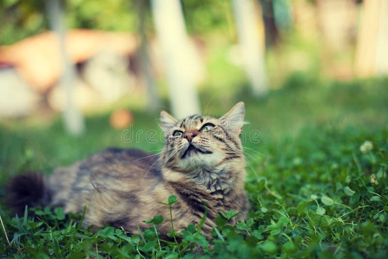 在三叶草的离群小猫 免版税图库摄影