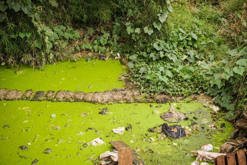 在三宝垄拍的一张绿色生苔肮脏的垄沟照片印度尼西亚 免版税库存照片