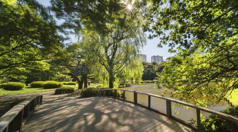 在上部池塘的垂柳树和在p的木桥 库存照片