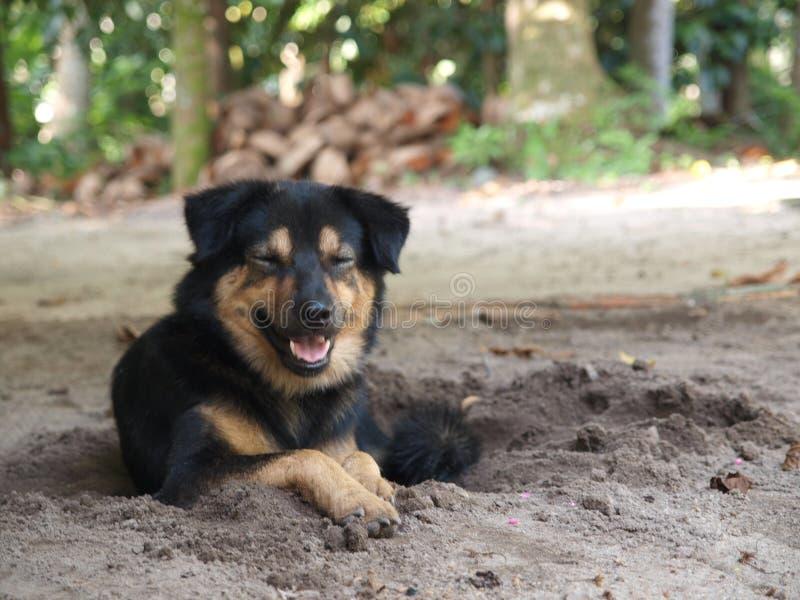 在下午太阳亮光的兴高采烈的狗 库存图片
