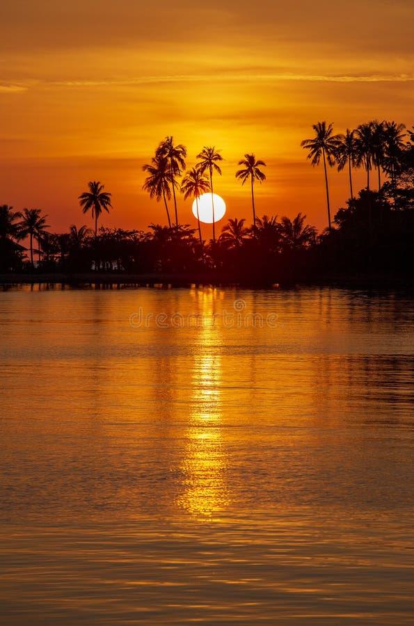 在下的日落期间的可可椰子树剪影在海岛上的海水在泰国 r 太阳,红色天空, 免版税库存照片