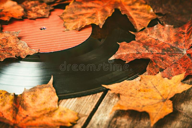 在下落的秋天叶子的Gramplastine 免版税库存照片