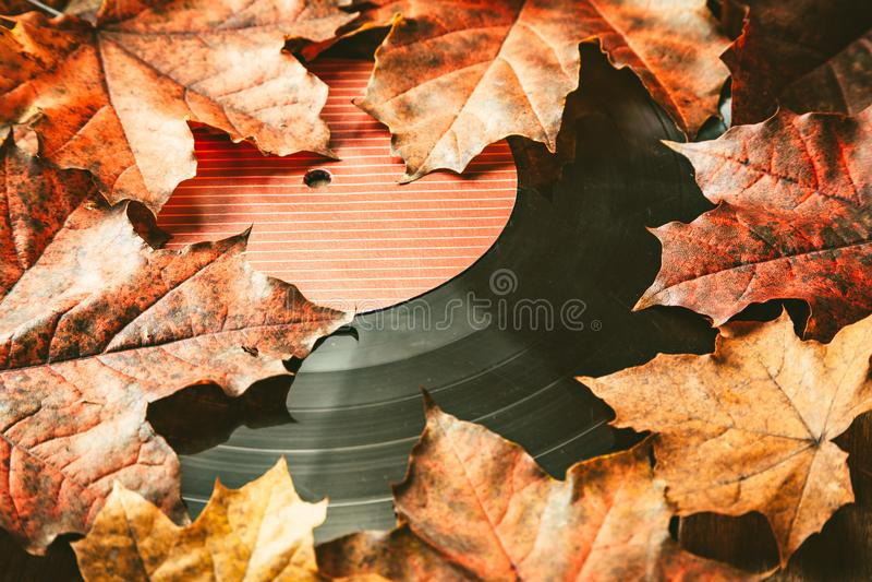 在下落的秋天叶子的Gramplastine 库存图片