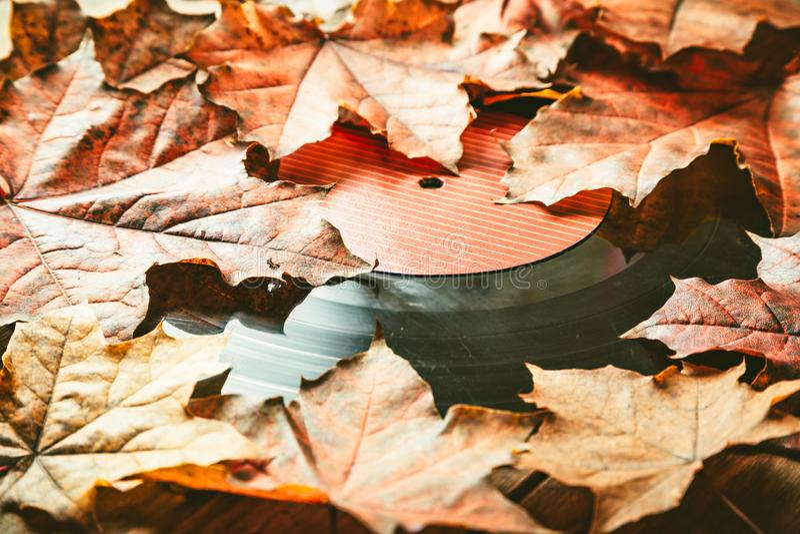 在下落的秋天叶子的Gramplastine 免版税库存图片