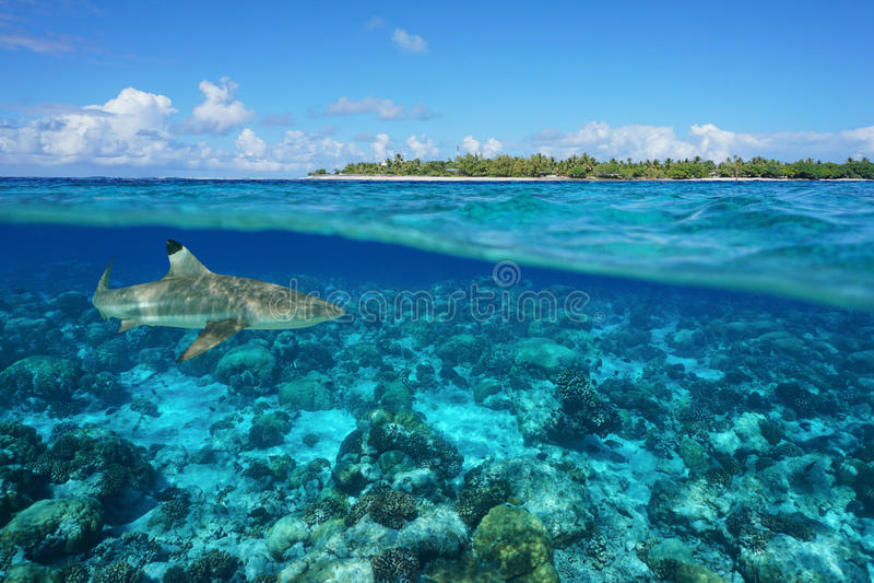 在下面海岛和鲨鱼水下的伦吉拉环礁 库存图片