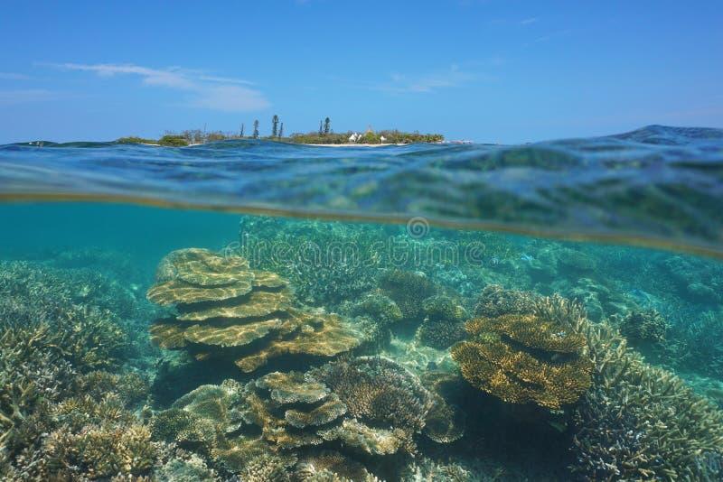 在下面海洋小岛珊瑚礁新喀里多尼亚 免版税库存照片