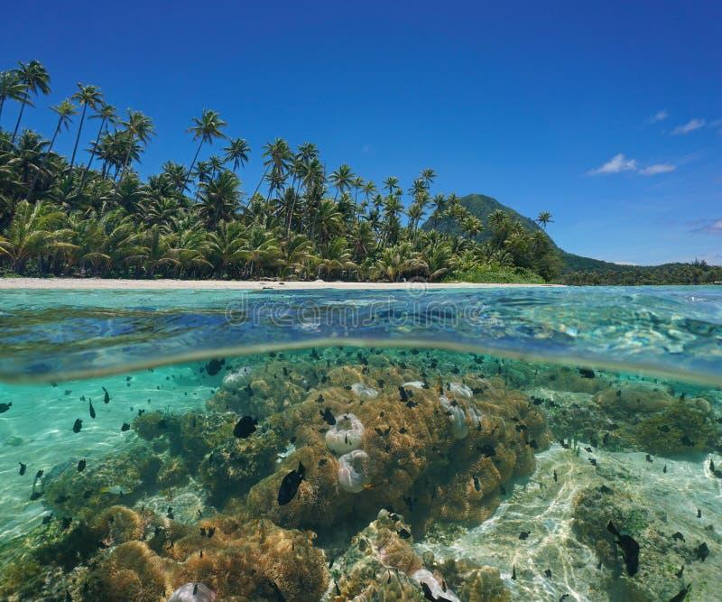 在下面盐水湖海岛海葵鱼太平洋 免版税库存照片