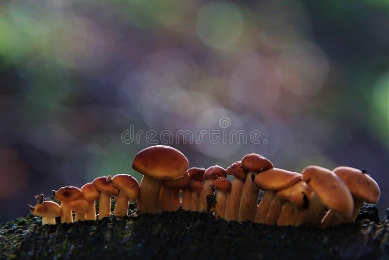 在不可思议的世界的蘑菇家庭 免版税库存照片