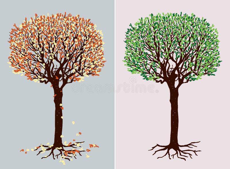 在不同的季节的落叶树图片