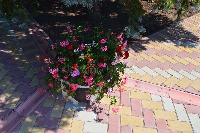 在不同的构成花盆的花花束  库存照片