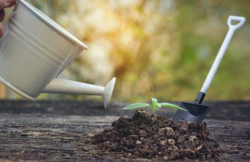 在与一把喷壶的土壤和一把铁锹在背景中增长与早晨光的幼木 免版税库存照片