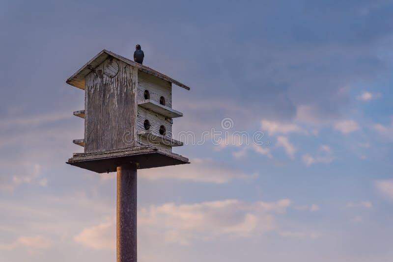 在与天空蔚蓝和云彩的木鸟舍栖息的鸟在背景中 免版税库存照片