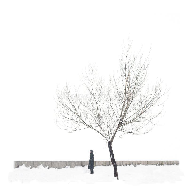 在与孤独的人的纯净的白色背景隔绝的积雪的唯一树 免版税库存图片