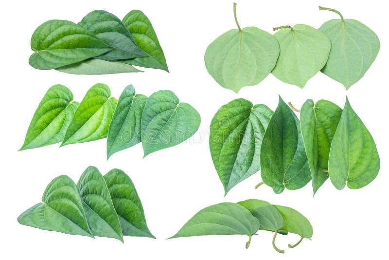 在与截去p的灰色背景隔绝的绿色蒋酱之叶叶子 皇族释放例证