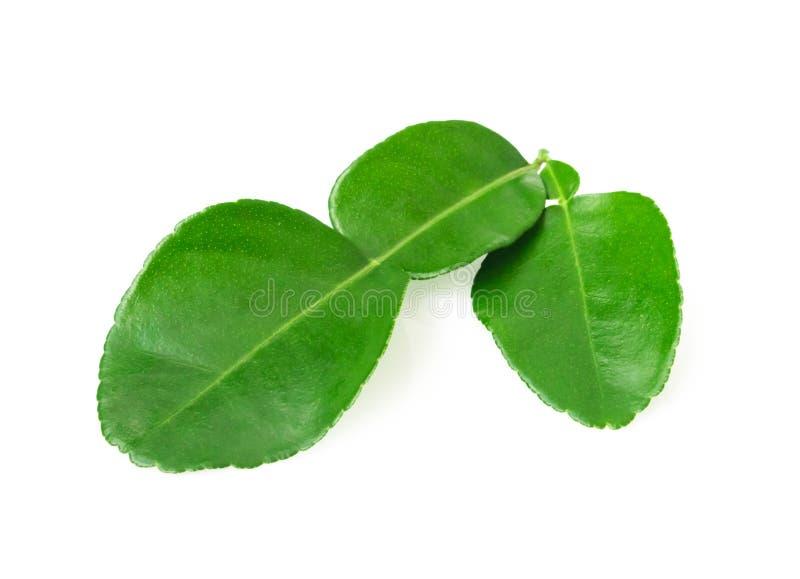 在与截去p的白色背景隔绝的香柠檬绿色叶子 免版税库存照片