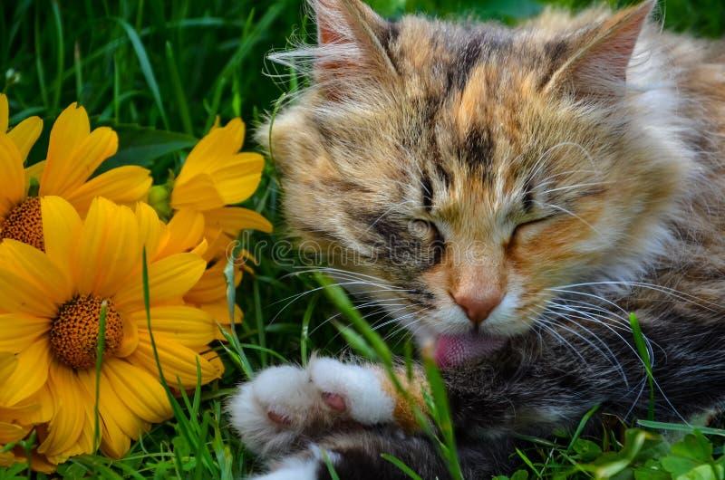 在与花的Ð ¡在草 免版税库存照片