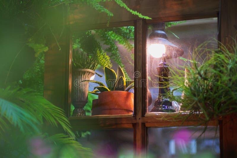 在与葡萄酒减速火箭的样式家庭菜园装饰的葡萄酒窗口里显示的小植物罐在晚上 免版税库存照片