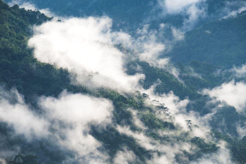 在与蓝天的有雾的天使绿叶雨林小山环境美化的图象 免版税图库摄影