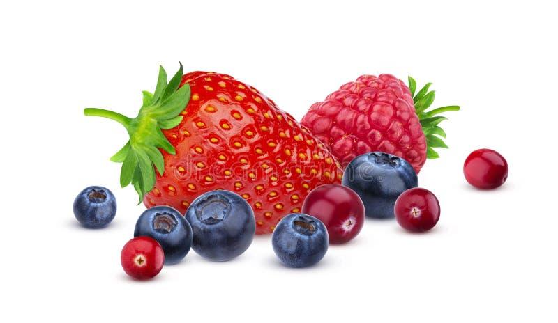 在与裁减路线的白色背景隔绝的堆不同的野生莓果 莓果的各种各样的类型,汇集 免版税库存照片