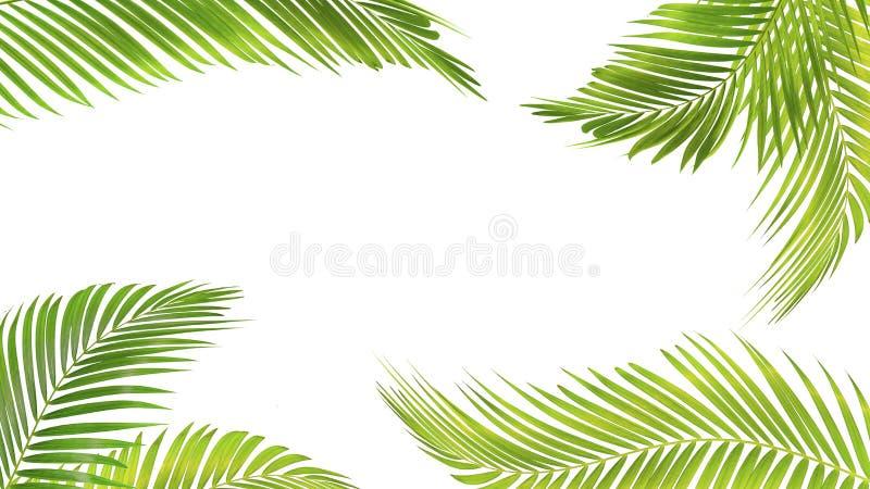 在与裁减路线的白色背景隔绝的绿色棕榈叶 皇族释放例证