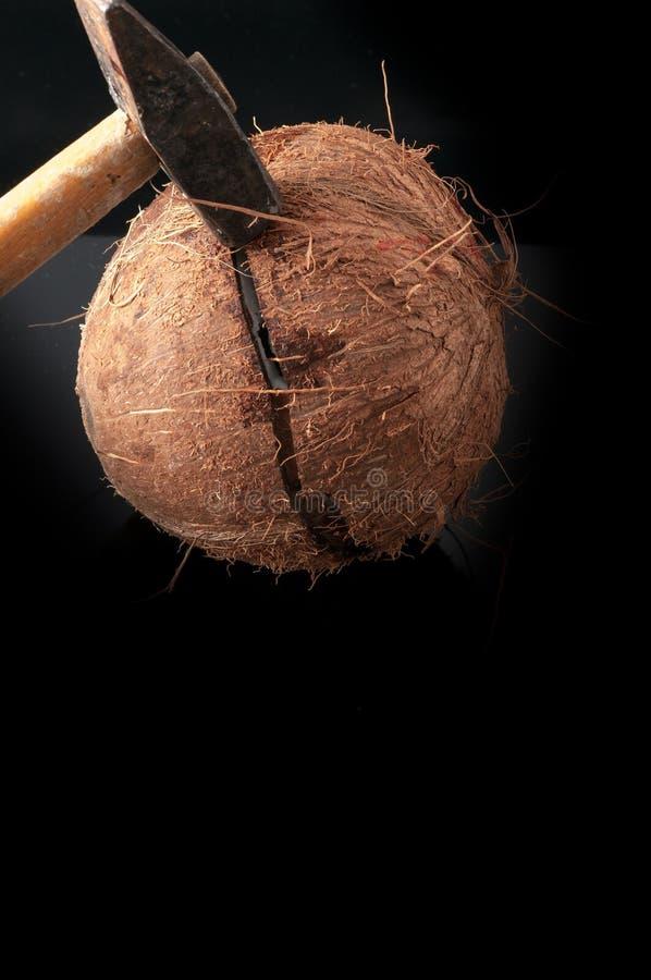 Download 在与锤子的一半打破的椰子 库存照片. 图片 包括有 browne, 异乎寻常, 图象, 新鲜, 螺母, 困难 - 59101052
