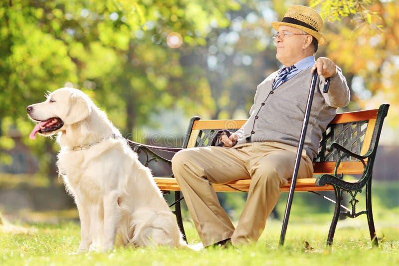 在与他的长凳安装的资深绅士放松在公园的狗 图库摄影