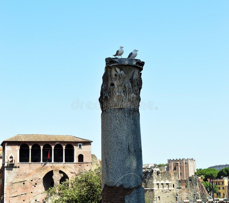 在专栏的海鸥在Trajan,罗马,意大利论坛  图库摄影