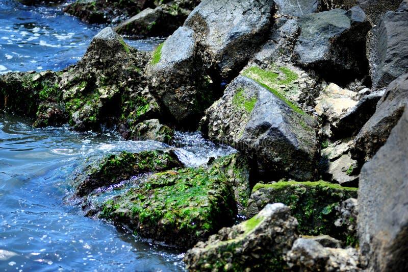 在东部岸的跳船岩石 免版税图库摄影