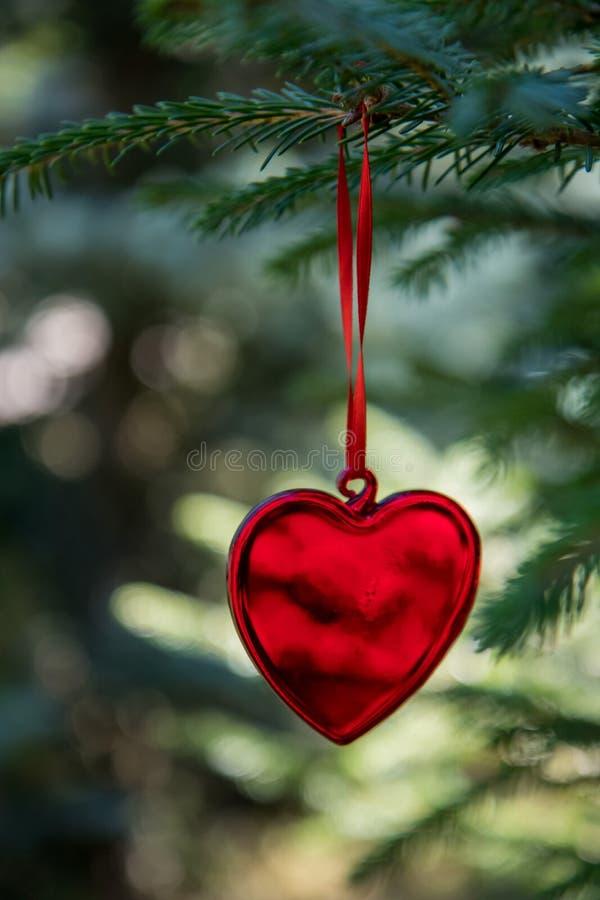 在丝带的红色装饰心脏在xmas树被弄脏的brach  圣诞快乐看板卡 寒假题材 新年好 免版税库存图片