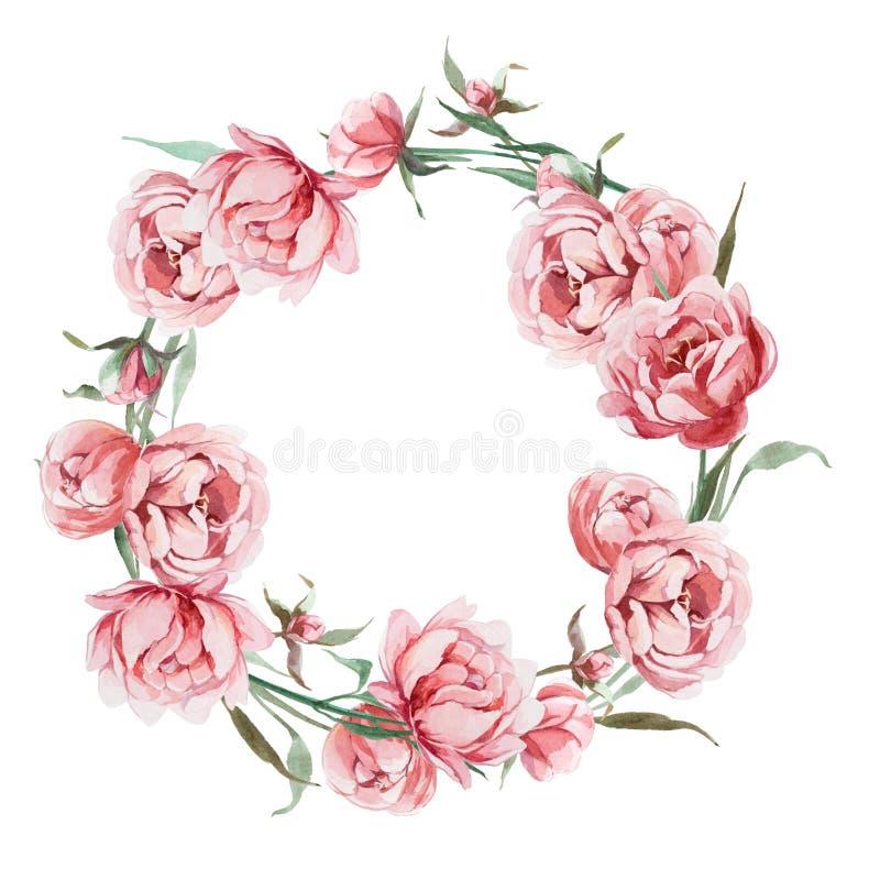 在丝毫隔绝的玫瑰色牡丹花水彩浪漫花圈  库存例证