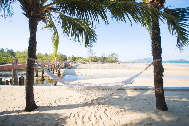 在两椰子之间的白色吊床 免版税图库摄影