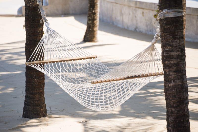 在两椰子之间的白色吊床 图库摄影