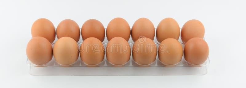在两行的鸡蛋 库存图片