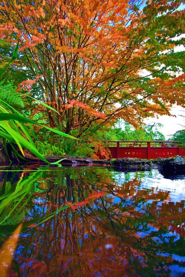 在中国公园的秋天树反射了i n水 免版税图库摄影
