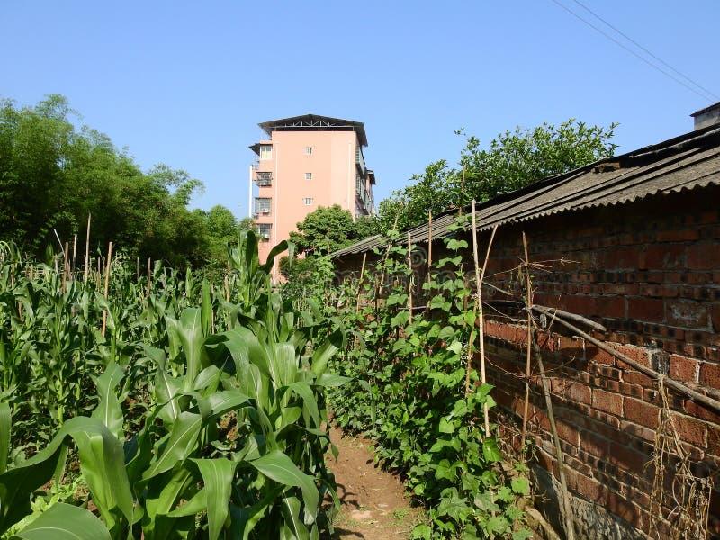 在中国农村的高楼 免版税库存图片