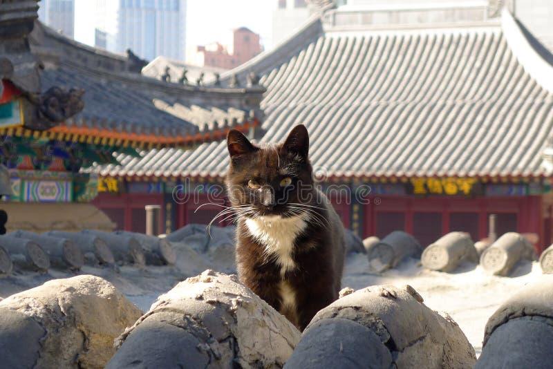 在中国寺庙屋顶的一只猫 免版税库存照片