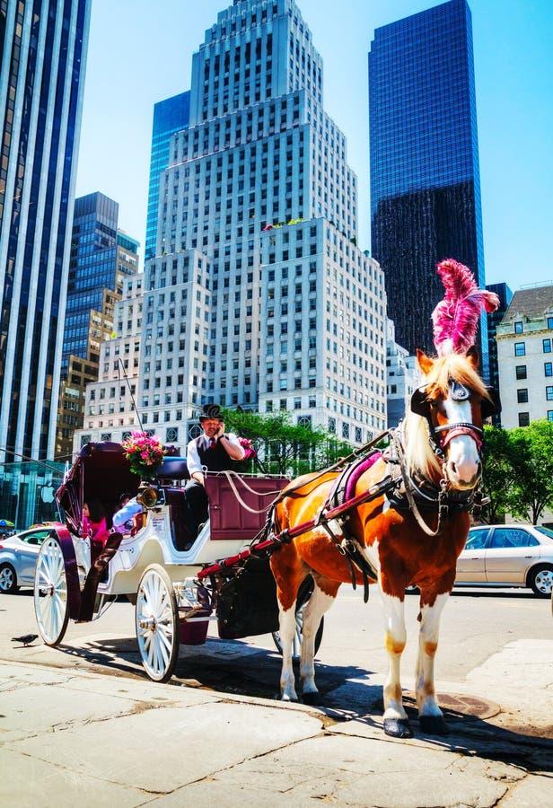 在中央公园的马支架在纽约城 图库摄影