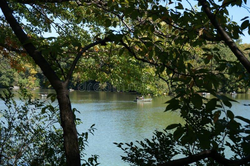 在中央公园纽约的树 库存照片