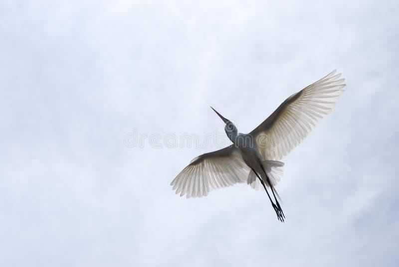 在中间飞行的热带鸟 免版税库存照片