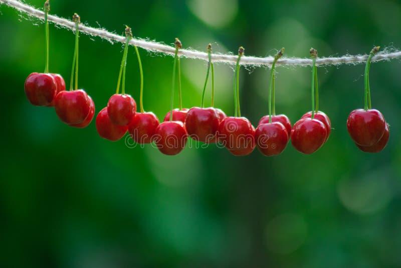 在串的樱桃在庭院里在一好日子 库存图片